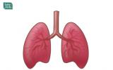 吸烟对胃有影响吗?